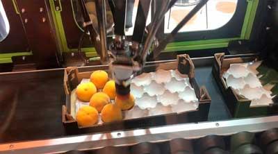 Maquinaria para Clasificar Fruta