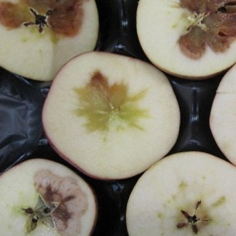 control calidad fruta tropical