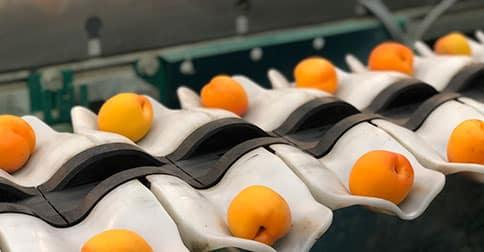 Calibración de Fruta