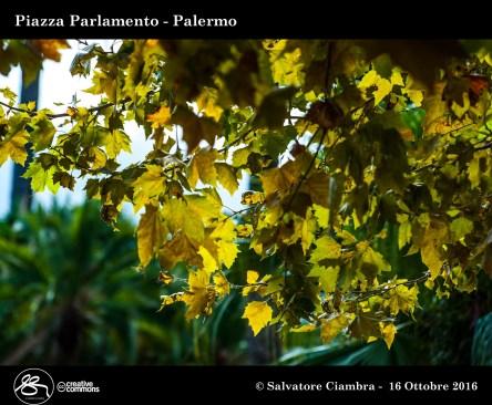 _d7d5815_bis_piazza_parlamento
