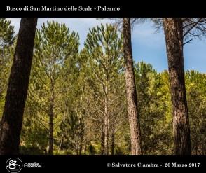 D8B_3479_bis_Bosco_di_San_Martino_delle_Scale