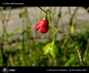 D8B_8077_bis_Foglie_Centro_Bonocore