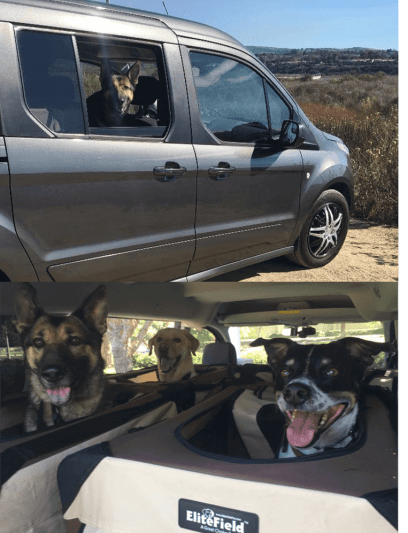Pet Walking Services in Irvine & Newport Beach: CiaoCiao PetCare's Group Dog Walking Services includes transport to trails & parks in a comfortable passengers van outfitted with crates