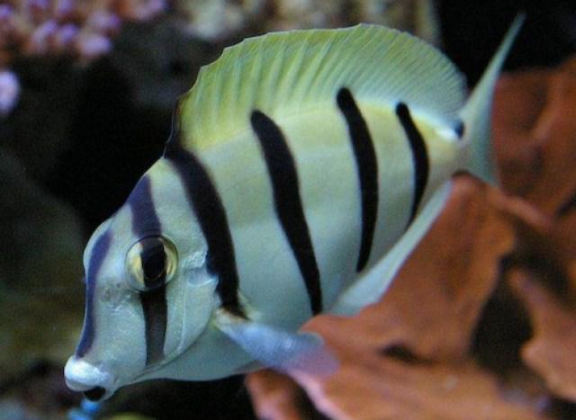 Cia Peixes e Corais