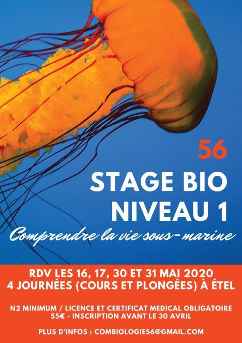 Stage Biologie sous-marine Niveau 1