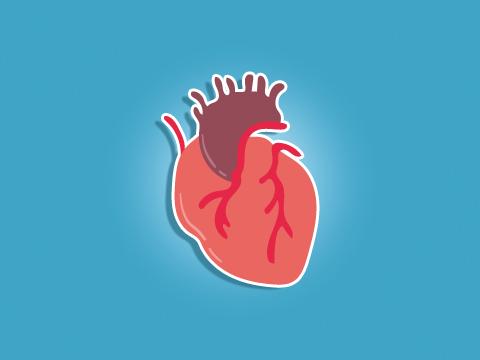 e-learning-plongee-MF2-coeur-vaisseaux-circulation