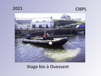 Stage Bio Ouessant 2021