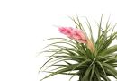 Hava Çiçeği Anlamı