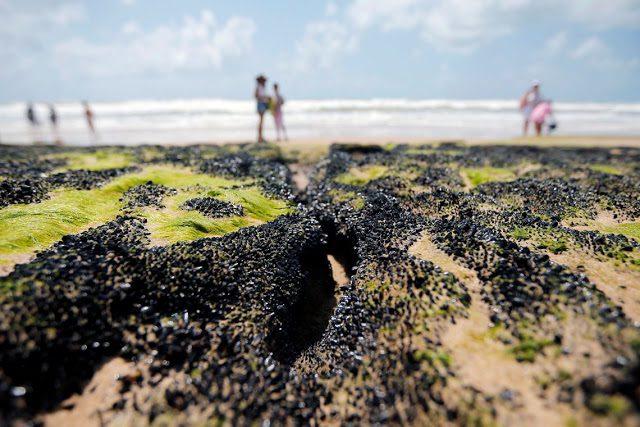 Governo libera R$ 130 milhões para seguro-defeso a pescadores do Nordeste