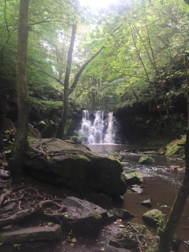 Goit Stock Falls