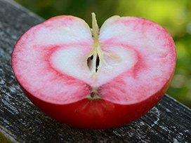 Æble overskåret