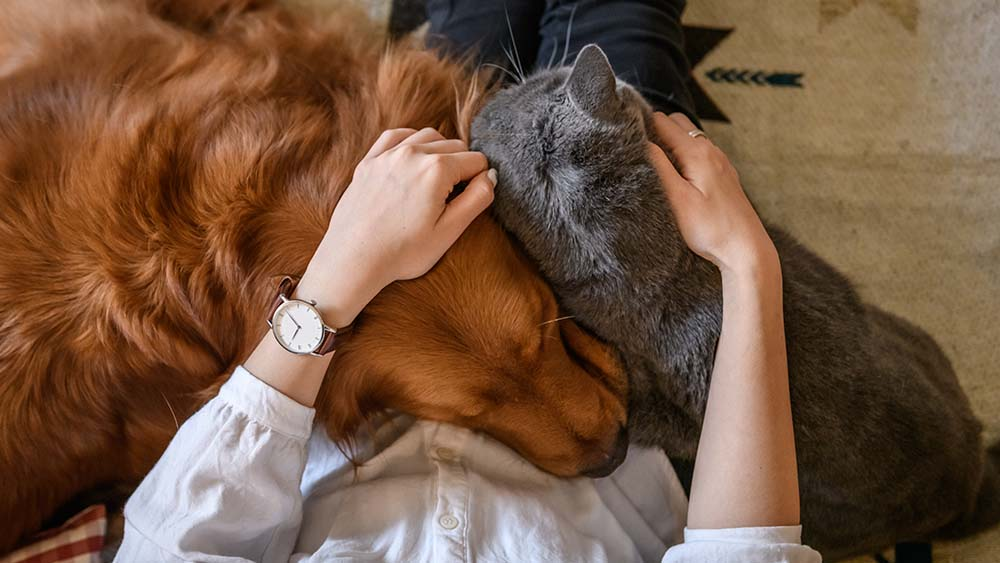 Pet Comfort Air Conditioning For Dogs Cats Top Questions Answered