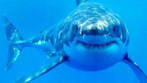 ¿Por qué tiburones y cocodrilos han cambiado tan poco en cien millones de años?