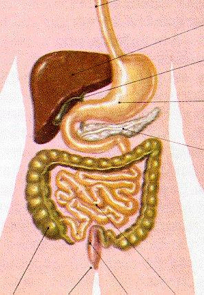 Ciencias Naturales Organos y Sistemas de Organos | Ciencias ...
