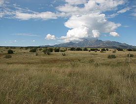 Grasslands of the Las Cienegas. Photo courtesy BLM.