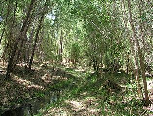 Riparian habitat at Las Cienegas National Conservation Area. Photo courtesy BLM.
