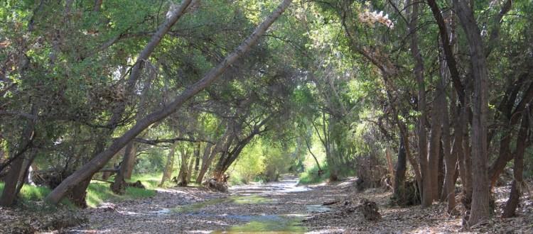 Cienega Creek: State of the Watershed