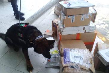 Unidad canina de la Policía Municipal de Solidaridad da resultados contra la delincuencia