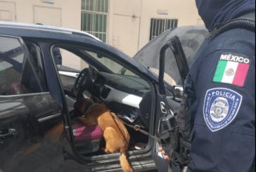 La Unidad Canina K9, con respaldo del C5, contribuye a prevenir y disuadir los delitos
