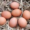 neden köy yumurtası çiftçiden eve
