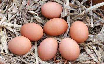 Neden Köy Yumurtası?
