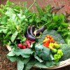 Bahçede Doğal Tarım çiftçiden eve