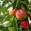 Ekolojik Tarım ve Organik Ürün çiftçiden eve