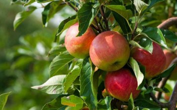 Ekolojik Tarım ve Organik Ürün