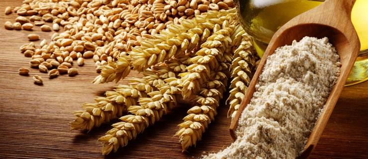 Atalık Siyez Buğdayı Nedir ?