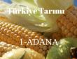 Adana'da Meyve Tarımı