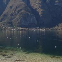 Oliveto Lario: Sentiero degli Ulivi