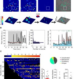 t cell calcium signal processing a automatic tracking of high density moving cells by maaacs b automatic signal analysis normalization thresholds  [ 2013 x 2576 Pixel ]