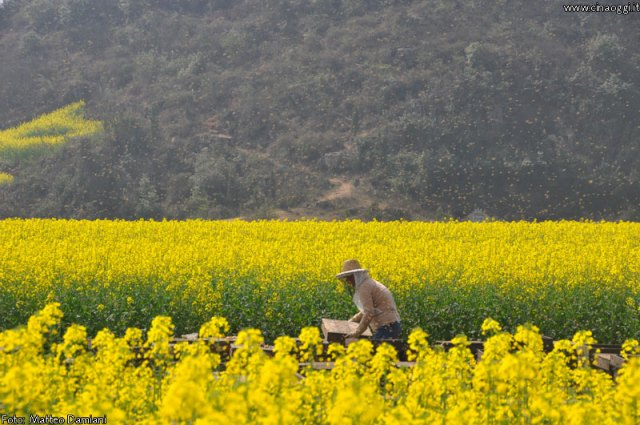 luoping_flowers_yunnan_003