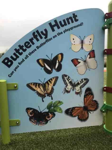 butterflyhunt