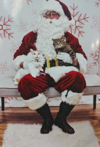 Pet Photos with Santa and Fundraiser for Lucky Tales Rescue @ LuLu's Pet Pantry | Burlington | Kentucky | United States