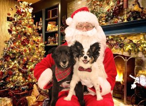 Picture Your Pets with Santa! @ Feeder's Supply (Walton) | Walton | Kentucky | United States