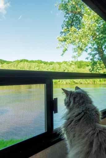 Cat Looking Out RV Window rv park full hookup amenities