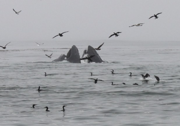 Whale Watching near Carmel