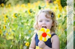 sunflowers-2157