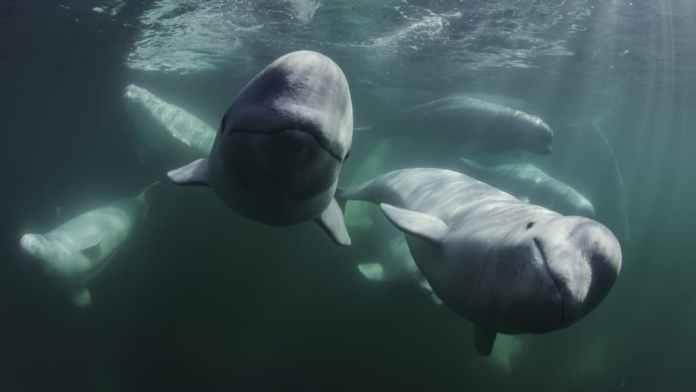 I segreti delle balene serie tv 2021
