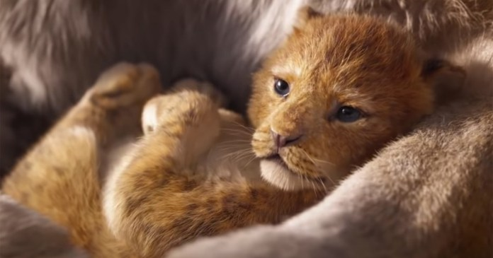 disney live action il re leone