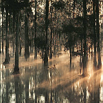 Manchac-Swamp_view_well_tour