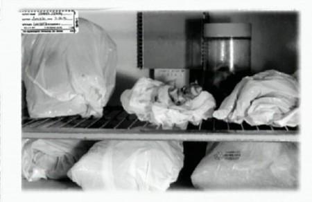 jeffrey-dahmer-fridge-4