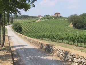 Tenuta di Arceno Vineyard Jackson Family Wines JFW