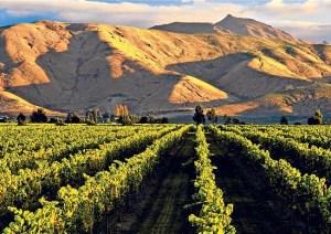 new-zealand-cludy-bay-vineyards