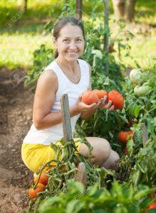 donne-in-agricoltura-pomodori