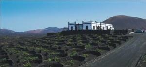 bodegas-la-geria-lanzarote-Vigne-più-straordinarie-del-mondo