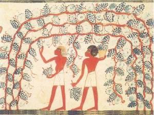 Origini del vino, gli Etruschi
