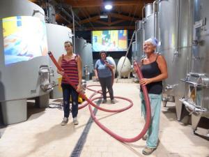 vendemmia-2016-Montalcino-Casato-Prime-Donne