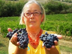 Vendemmia-2012-Montalcino-Casato-Prime-Donne